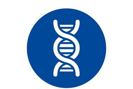 Icon Stammzelltransplantation